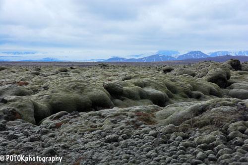 Iceland-Mossy-lava-0145.JPG