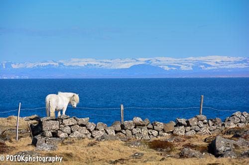 Iceland-horse-0013.JPG