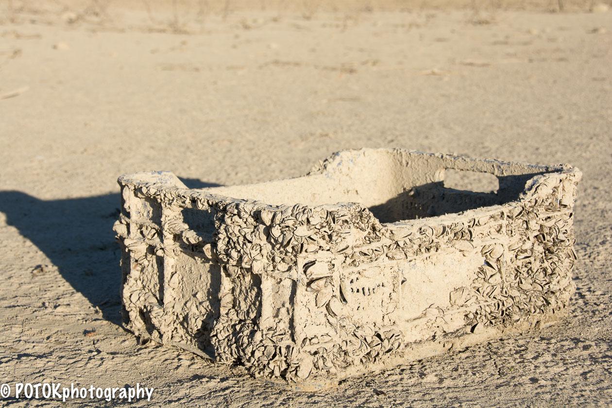 Beachcombing-1464.JPG