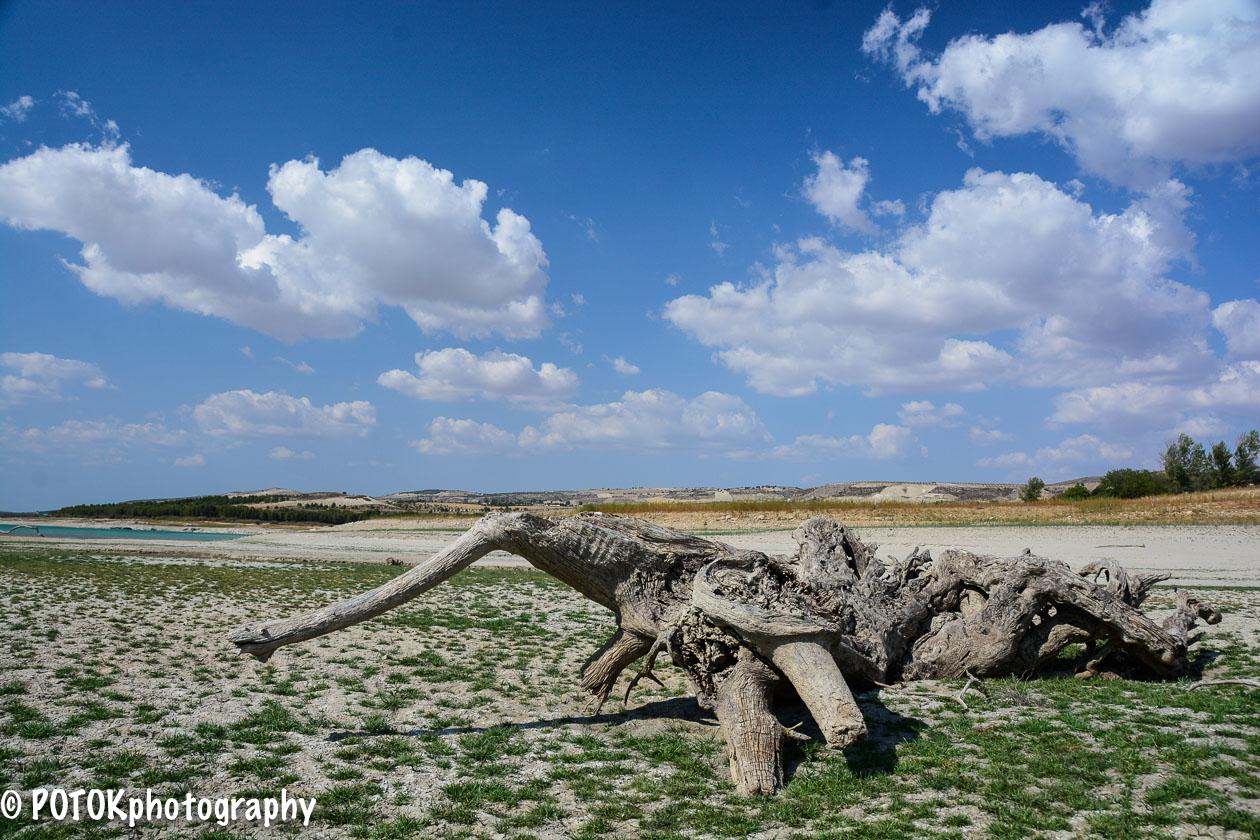 Dead-tree-in-a-lake-1145.JPG