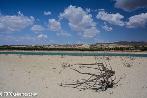 Dead-trees-in-a-lake-1081.JPG