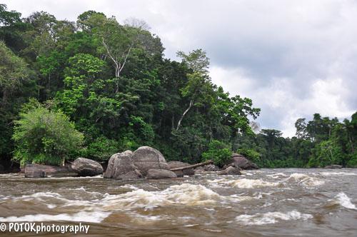 Suriname-rivier-0088.JPG